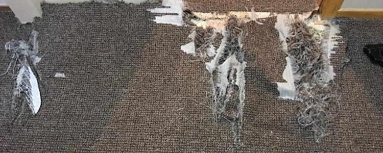 Best Carpet Repair Pakenham